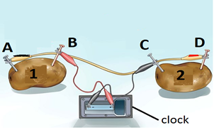G 6likp50nlej28o94unl2ia0 additionally Watch in addition Index further Using Interactive Notebooks To Learn likewise When Lighting A Lightbulb Use A Thicker Wire. on potato circuit experiment