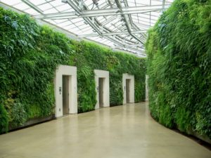 eco-green walls