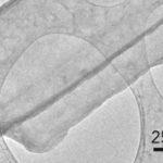 Cryo-Electron Microscopy Spies on Dendrites
