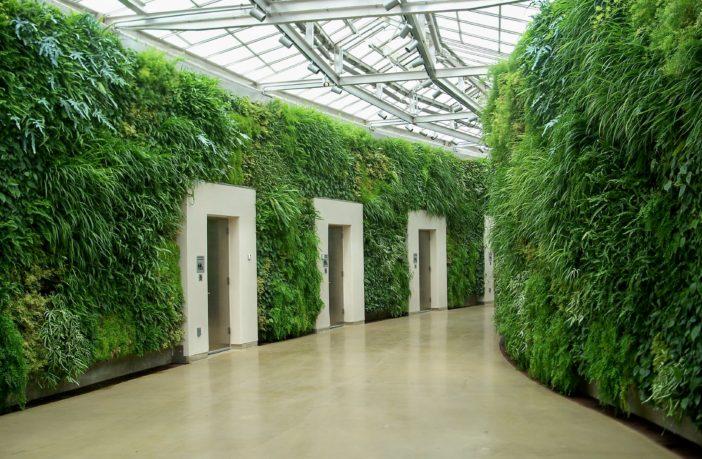eco-green walls