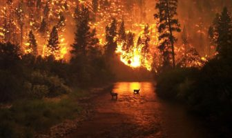 deadly wildfires